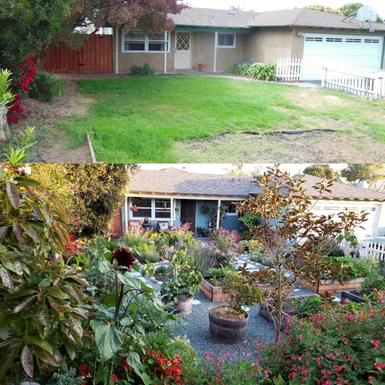 When we purchased the house in 2013 compared to fall of 2018. A peek into the front yard from behind the new avocado tree. The before photo shows a barren yard and had dead grass. The bottom photo shows a yard overflowing with edible plants, flowers, fruit trees, no lawn, gravel and stone pathways, and raised garden beds.