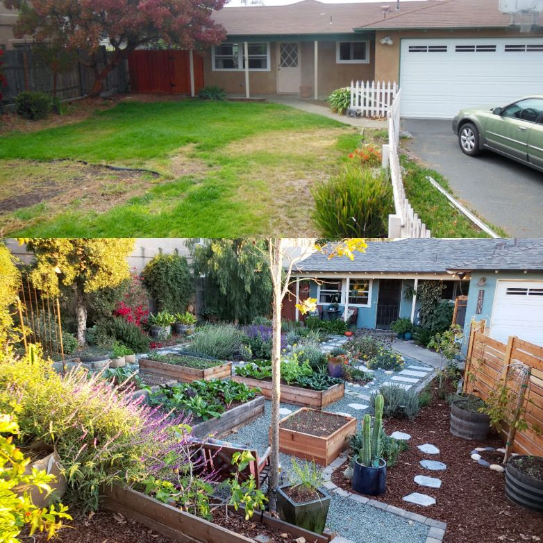 """A before and after shot of our front yard. The """"before"""" after shows a barren half-dead lawn. The """"after"""" photo shows all of the grass removed, and in it's place, tons of raised garden beds, potted plants, fruit trees, gravel and stone pathways, and a new place full of life."""