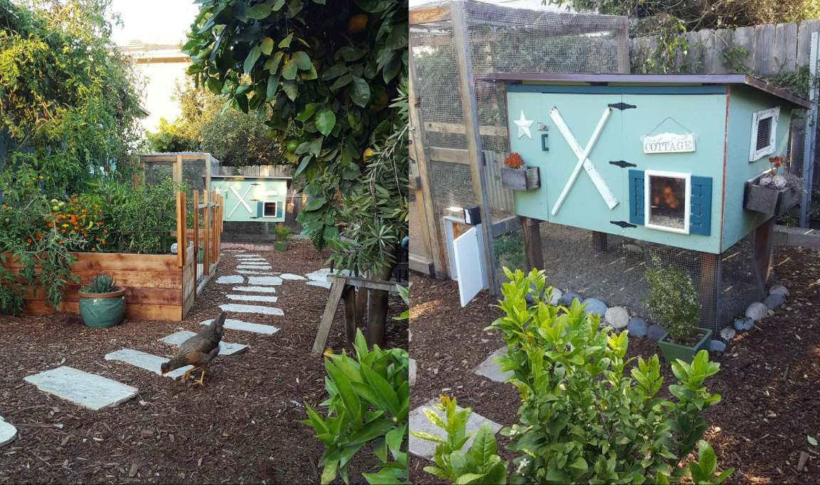 The Homestead and Chill chicken coop. It is homemade coop, about 5 feet long and 3 feet wide, and protected from predators with hardware cloth. The coop is green with blue shutters, a little window, and small planter boxes with succulents mounted on it.
