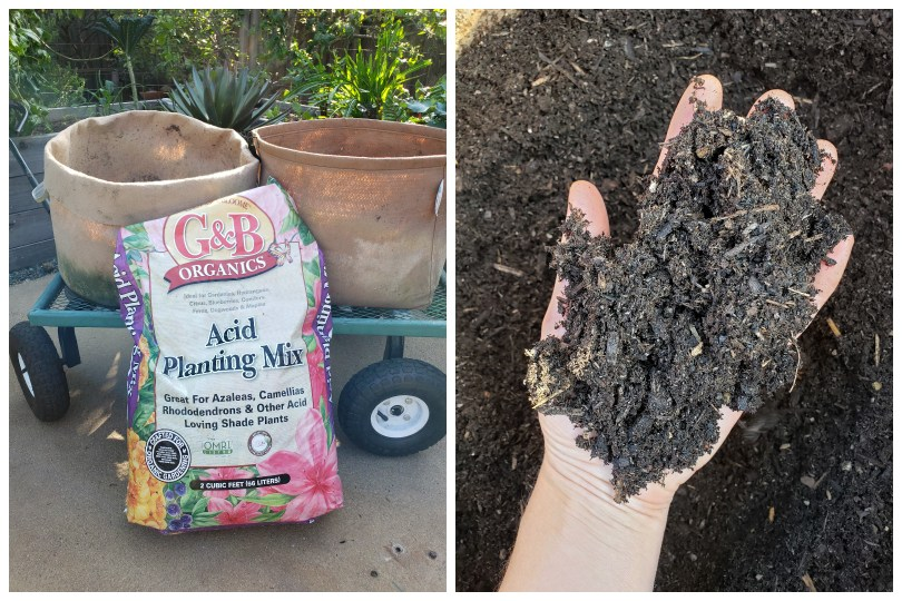 """A bag of soil that says """"Acid Planting Mix"""" is leaned up on a garden cart, that has two large tan fabric grow bags on the top of it. Those bags are being filled with that soil soon. The cart is positioned on a patio area with plants in the background. A hand reaches into the soil and shows it has a fluffy texture."""