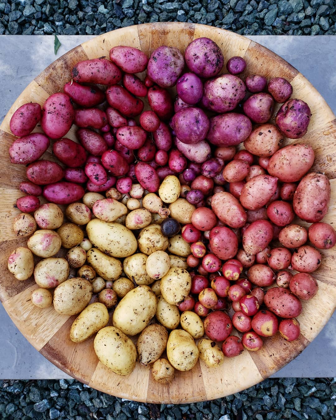 How To Grow Potatoes In Containers Homestead And Chill