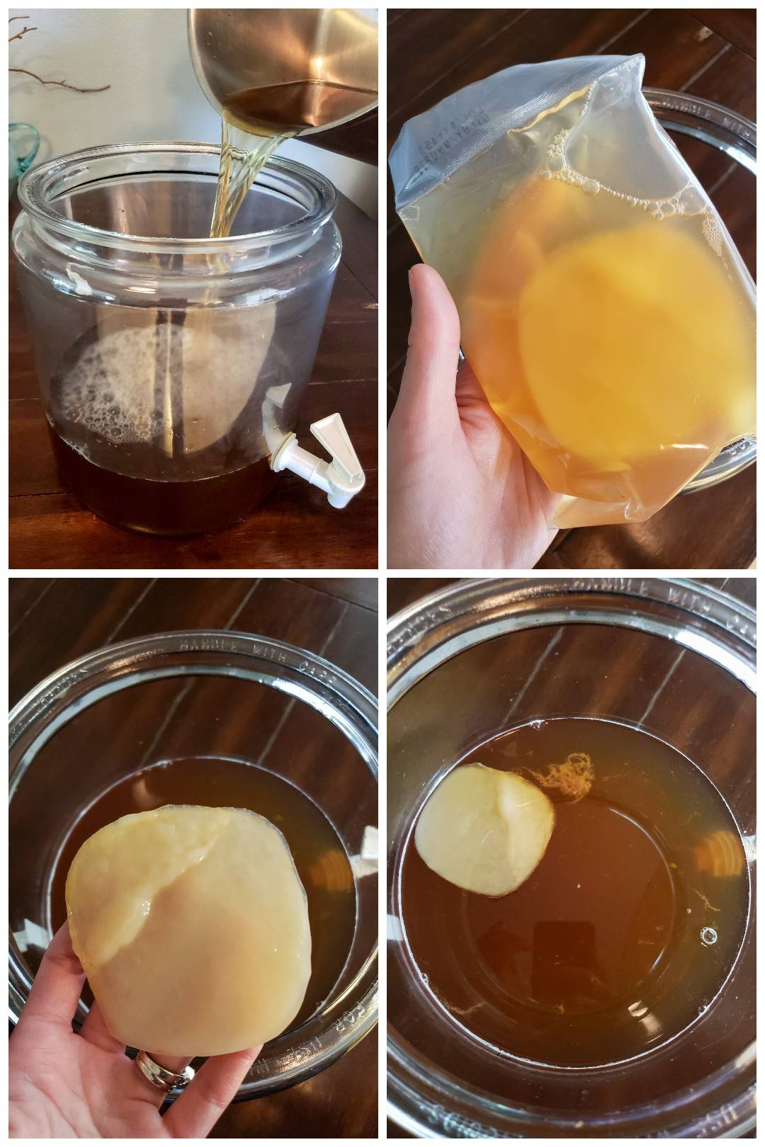 Four images showing the process of setting up a new kombucha brew, including pouring tea into a glass vessel, pouring in starer liquid, and adding a small round white SCOBY. It is flat, but about as big around as a softball.