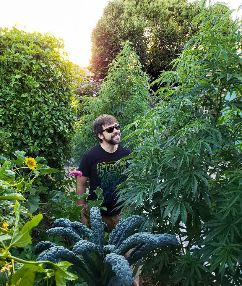 How To Feed Cannabis Organically Top Dressings Teas More Homestead And Chill