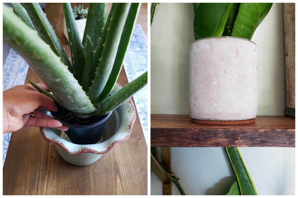 Houseplant Care 101 The Ultimate Guide To Happy Healthy Indoor