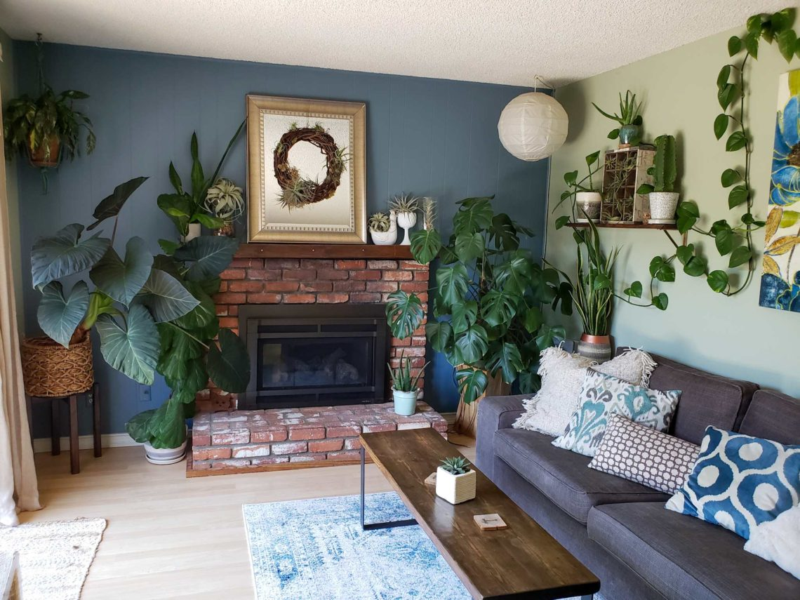Houseplant Care 101 The Ultimate Guide To Happy Healthy Indoor Plants Homestead And Chill