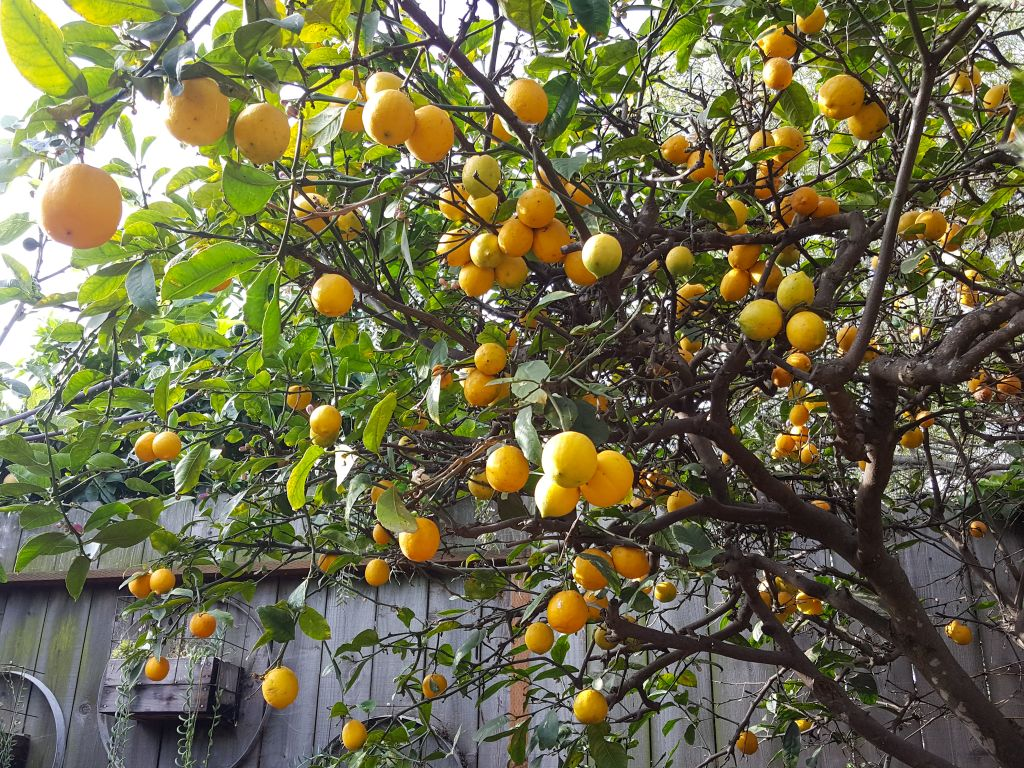 How To Choose What Fruit Trees To Plant Climate Varieties More Homestead And Chill