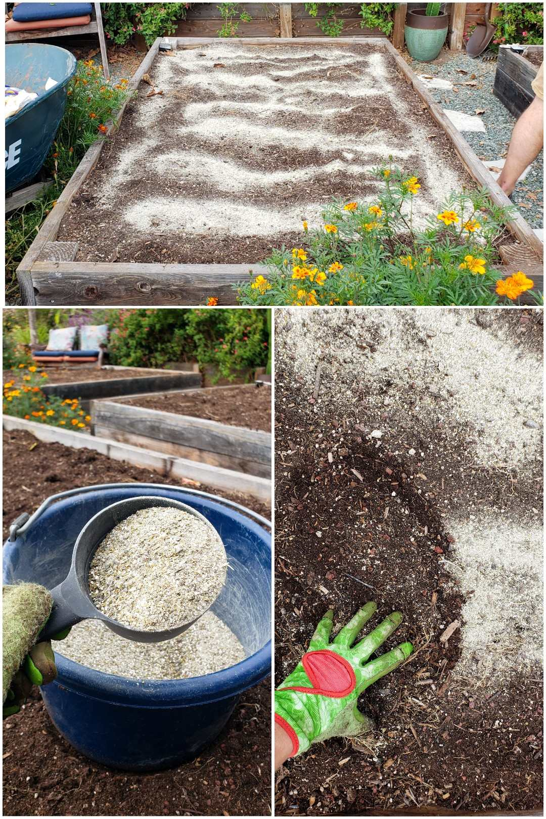 A three part image collage, the first image shows a garden bed that is empty of plants yet is full of soil. There  is a whitish dust spread throughout the top of the soil. There is a wheel barrow next to the garden bed, as well as various marigolds. The second image shows a blue bucket sitting on top of an empty garden bed, a hand is holding a measuring cup of sorts directly above the bucket where the measuring cup and bucket both contain various amendments used to feed the soil and the plants that will soon be planted in it. The third image shows the top of a garden bed, the soil has been sprinkled with the amendments, and a gloved hand is starting to scratch the amendments into the soil, mixing it into the top inch or so.
