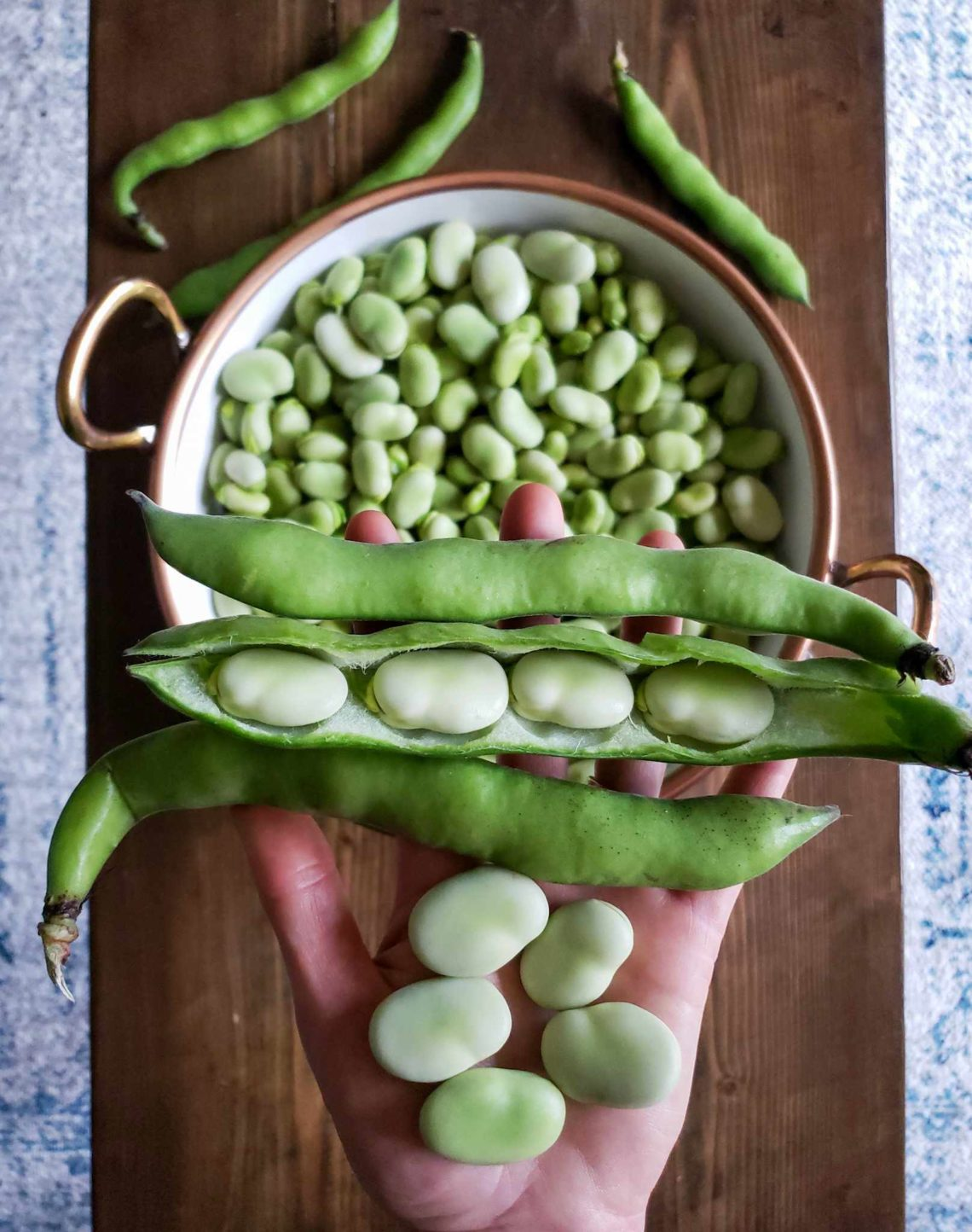 How To Grow Use Fava Beans Broad