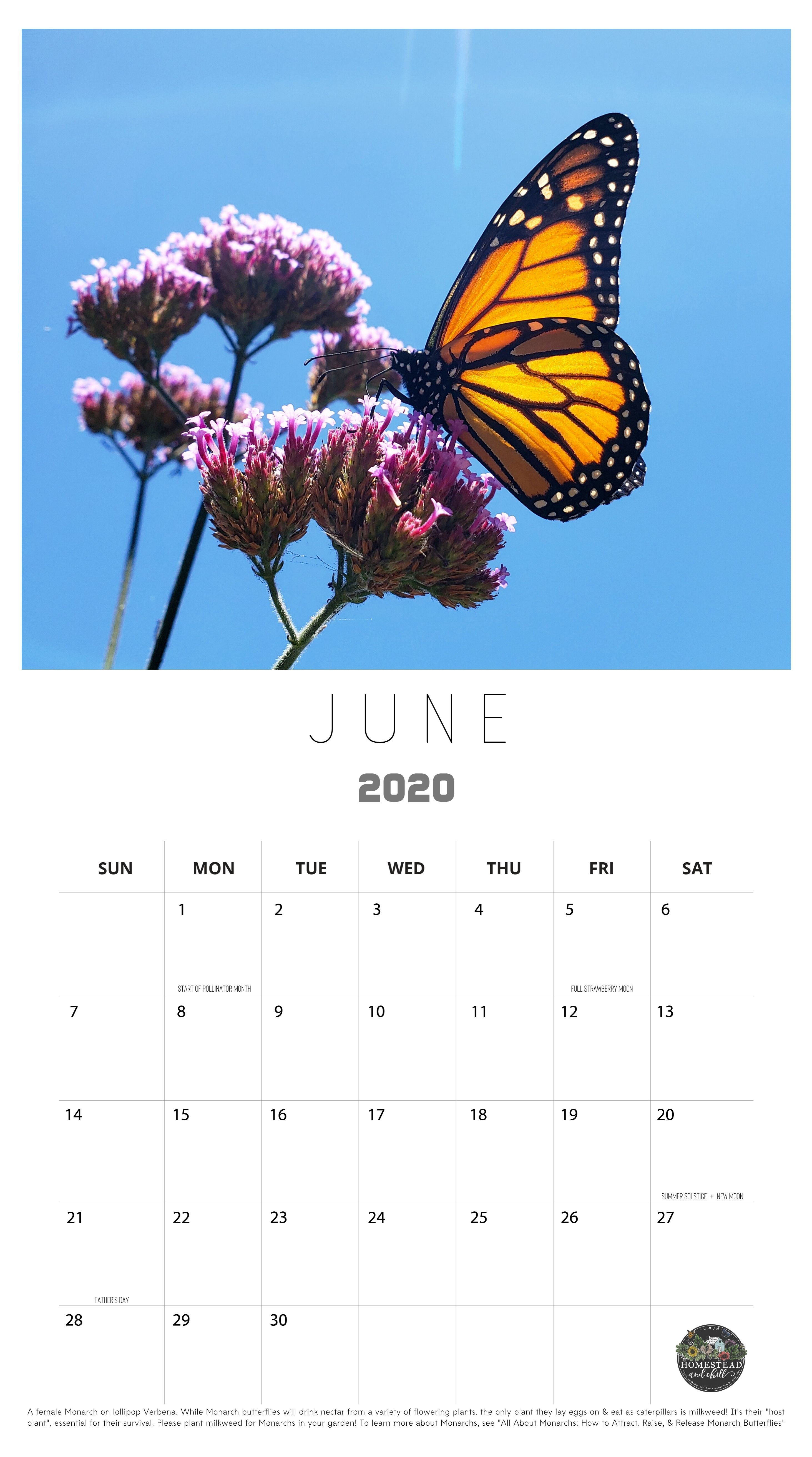 Homestead and Chill's 2020 calendar is shown, the month of June is the part of the calendar that is depicted and the image is a Monarch butterfly drinking nectar from a Lollipop Verbena.
