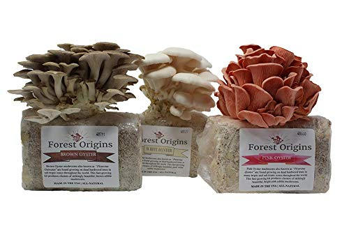 An image taken from a website shows three type of mushrooms growing from substrate that is in the shape of a square. They are all oyster mushrooms and from left to right they are brown, white, and pink in color.