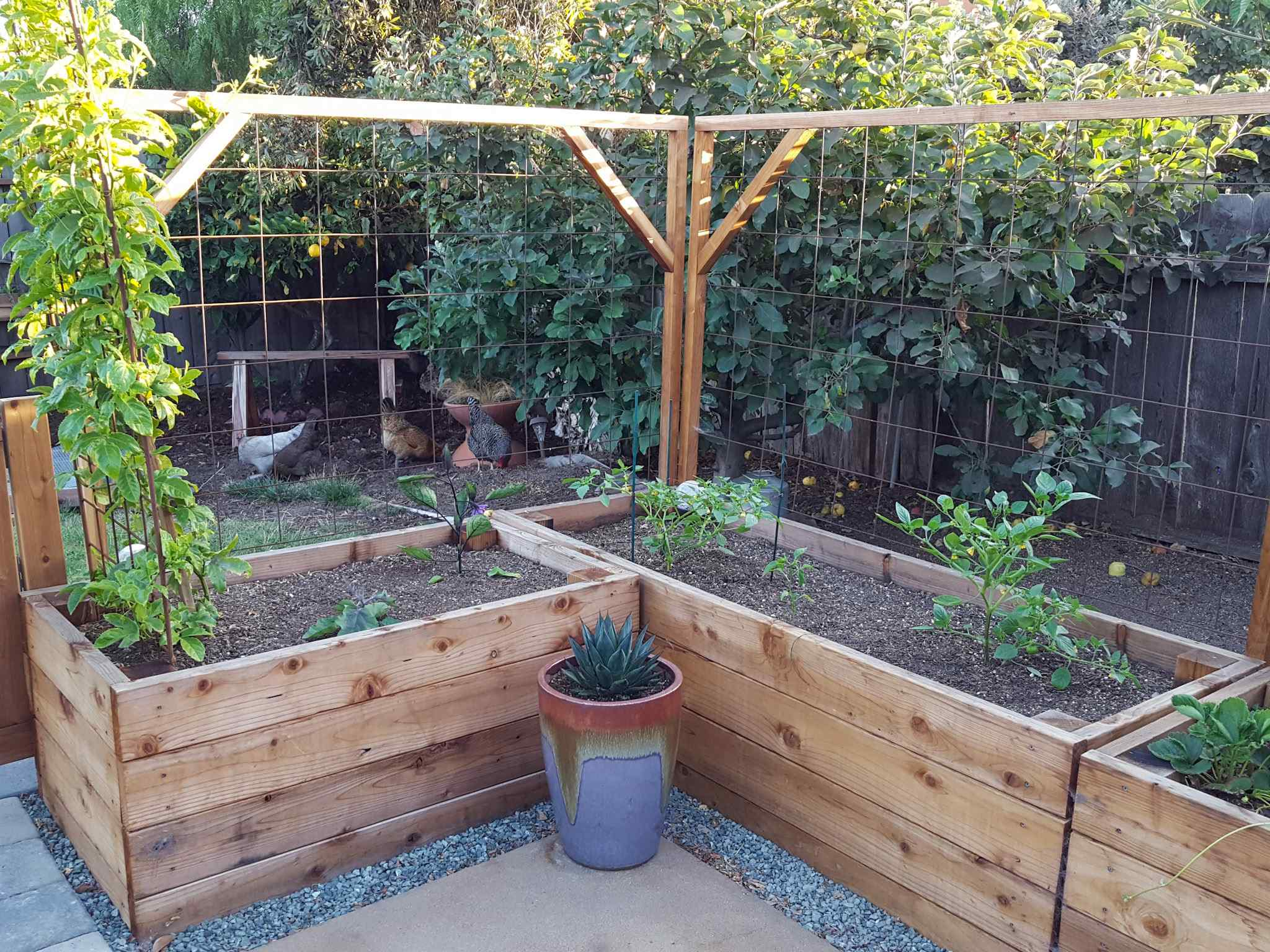 How To Build A Trellis Inexpensive Easy Designs Homestead And