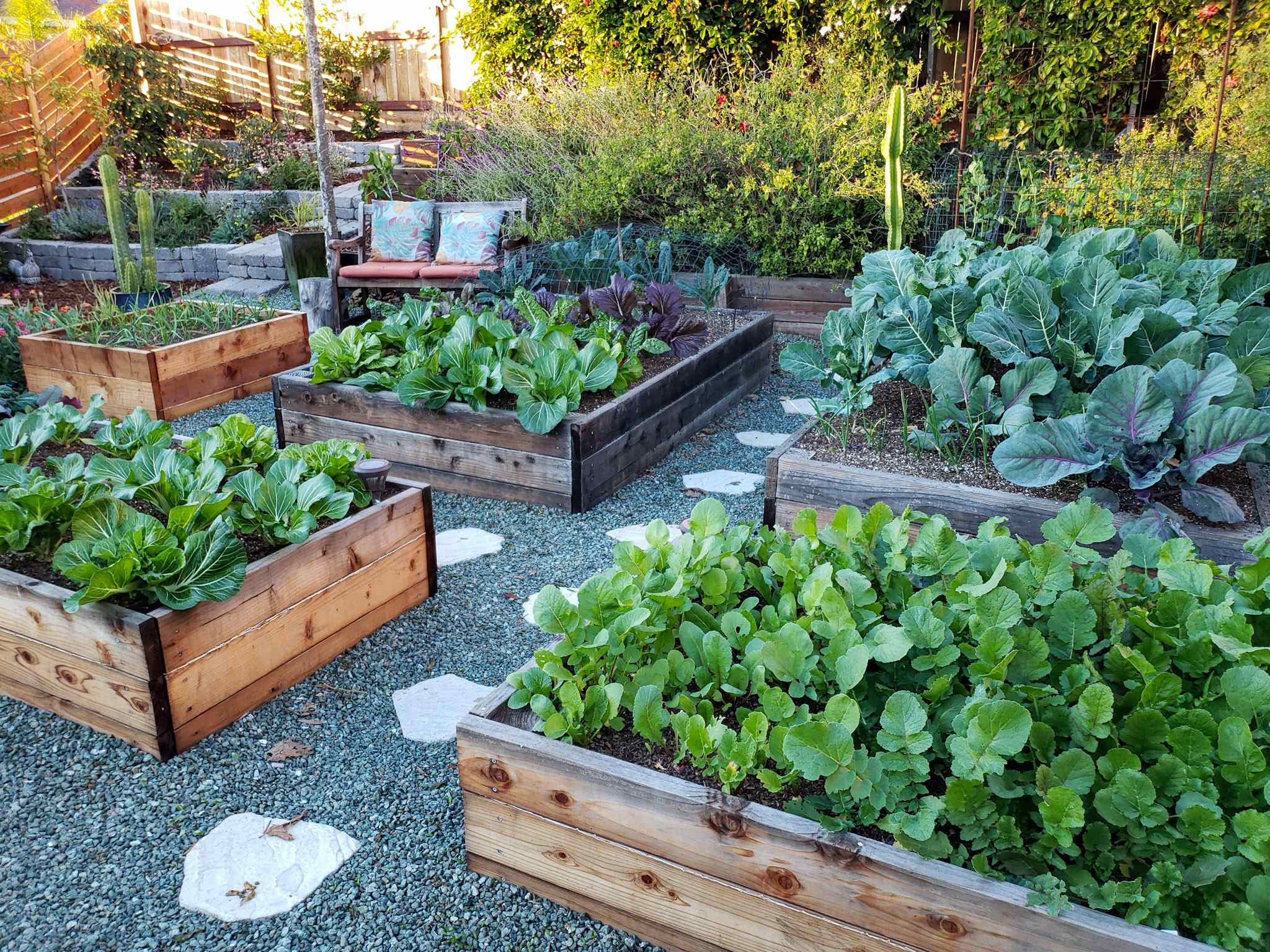 Raised Garden Beds Vs In Ground Beds Pros Cons Homestead And