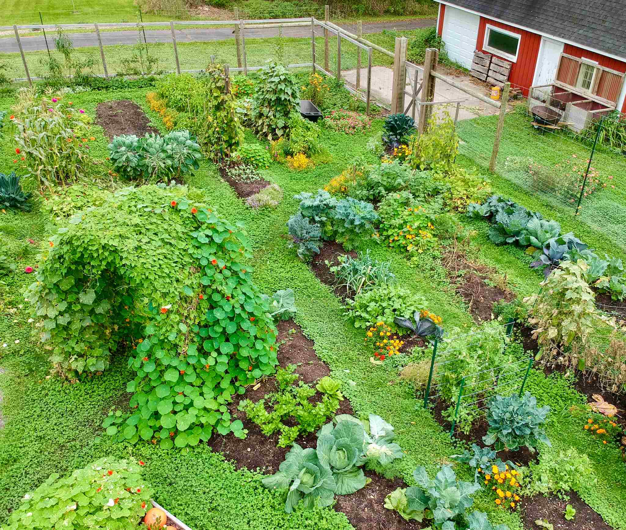 Raised Garden Beds Vs. In-Ground Beds: Pros & Cons