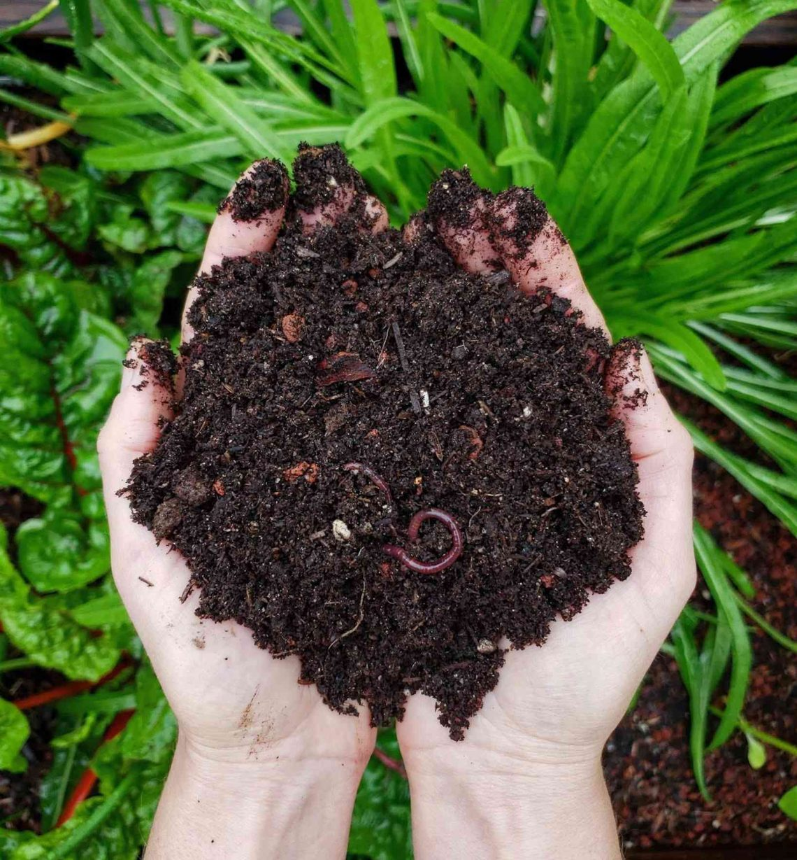 Composting 101 What Why How To Compost At Home Homestead And