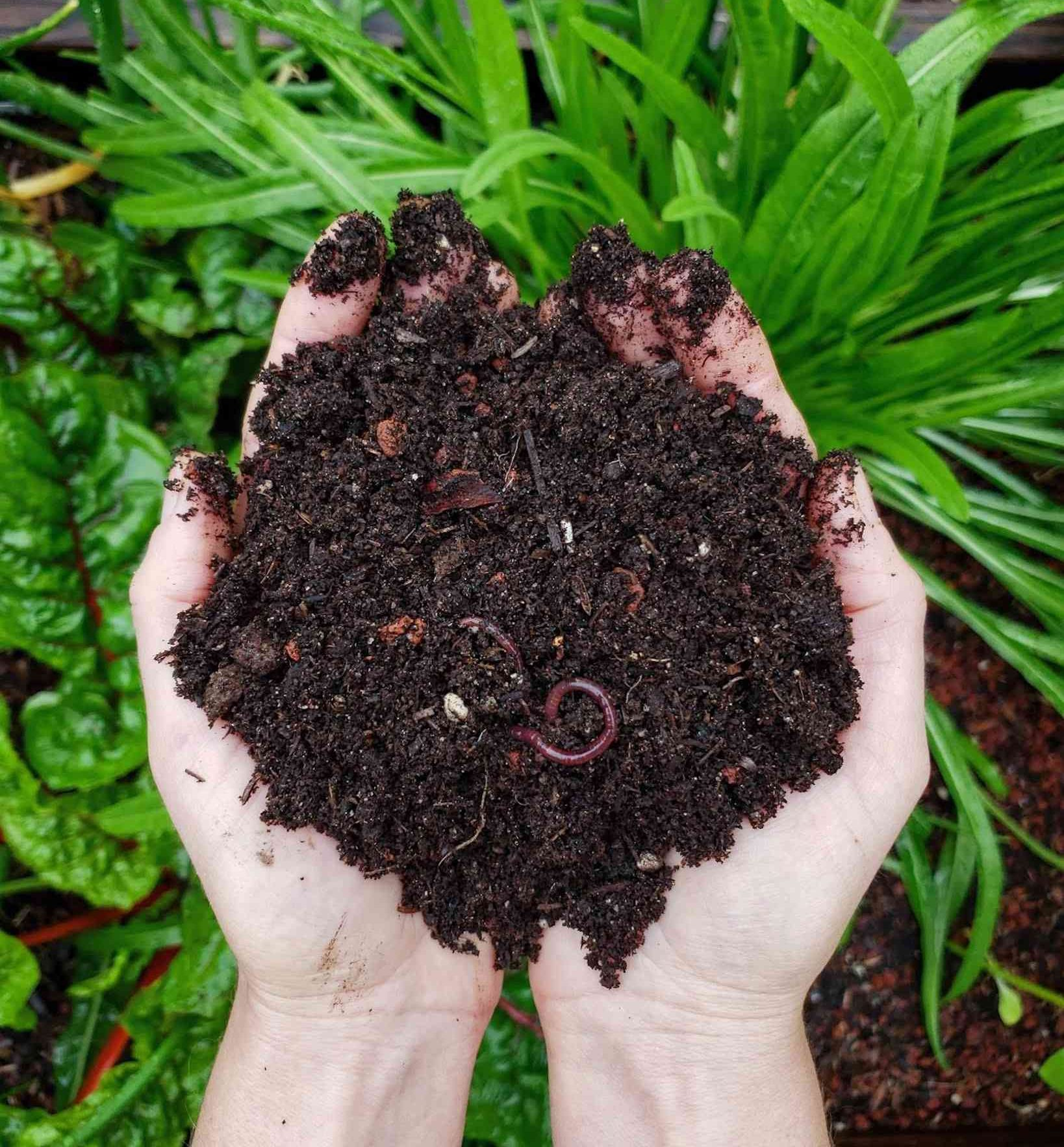 Composting 101 What Why How To