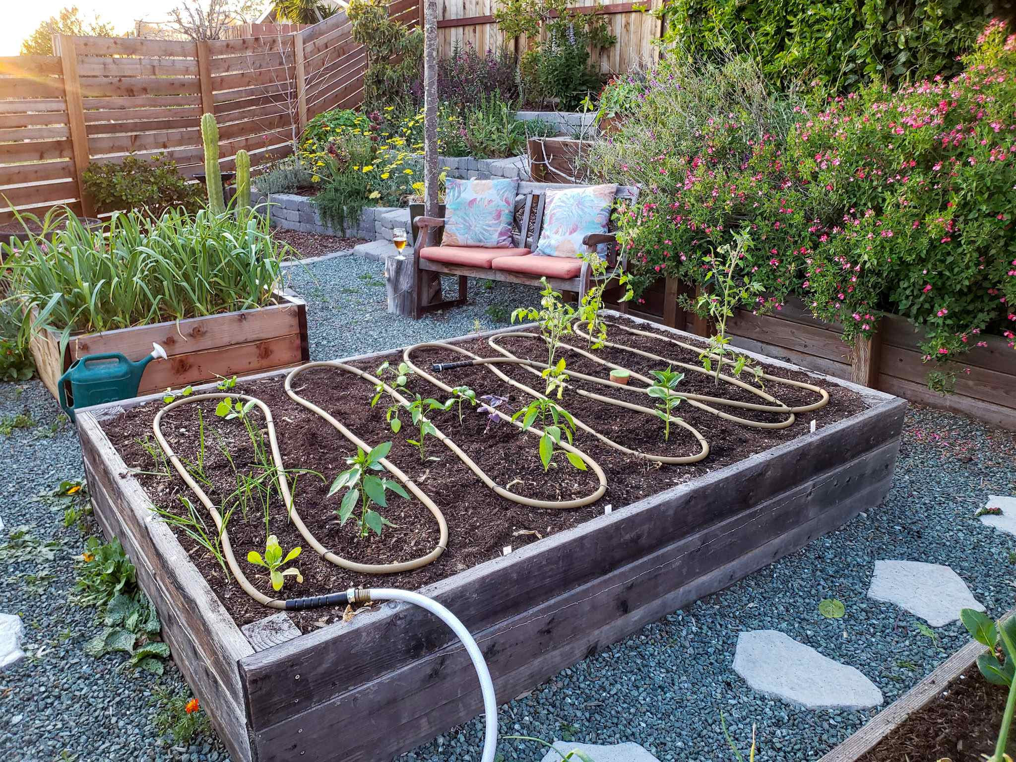 planting tomatoes in raised beds