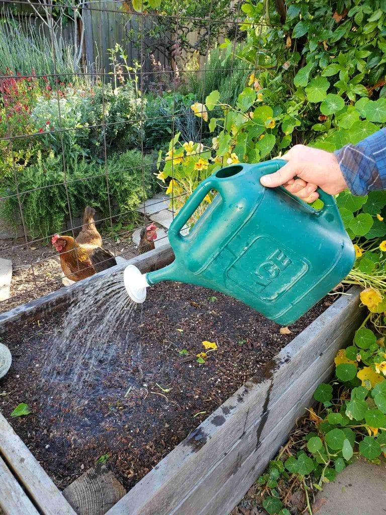 How To Kill Grubs Garden Soil Pests Organically W Beneficial
