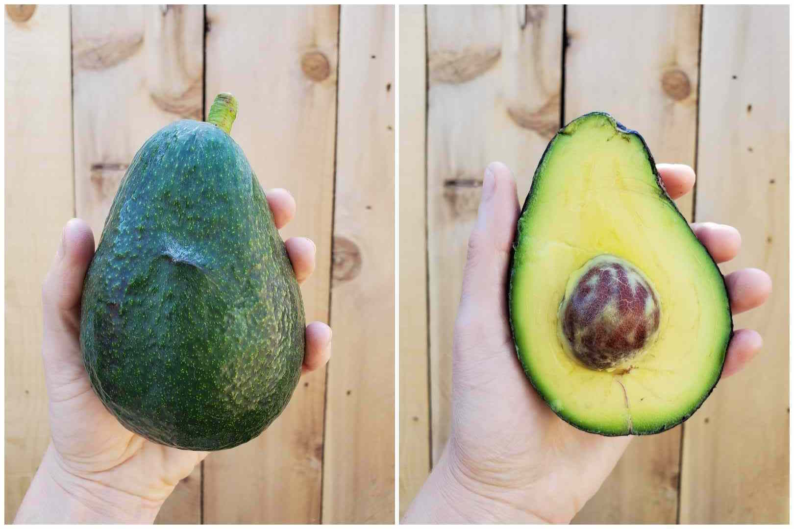20 Awesome Avocado Varieties Type A Type B Avocados Explained Homestead And Chill