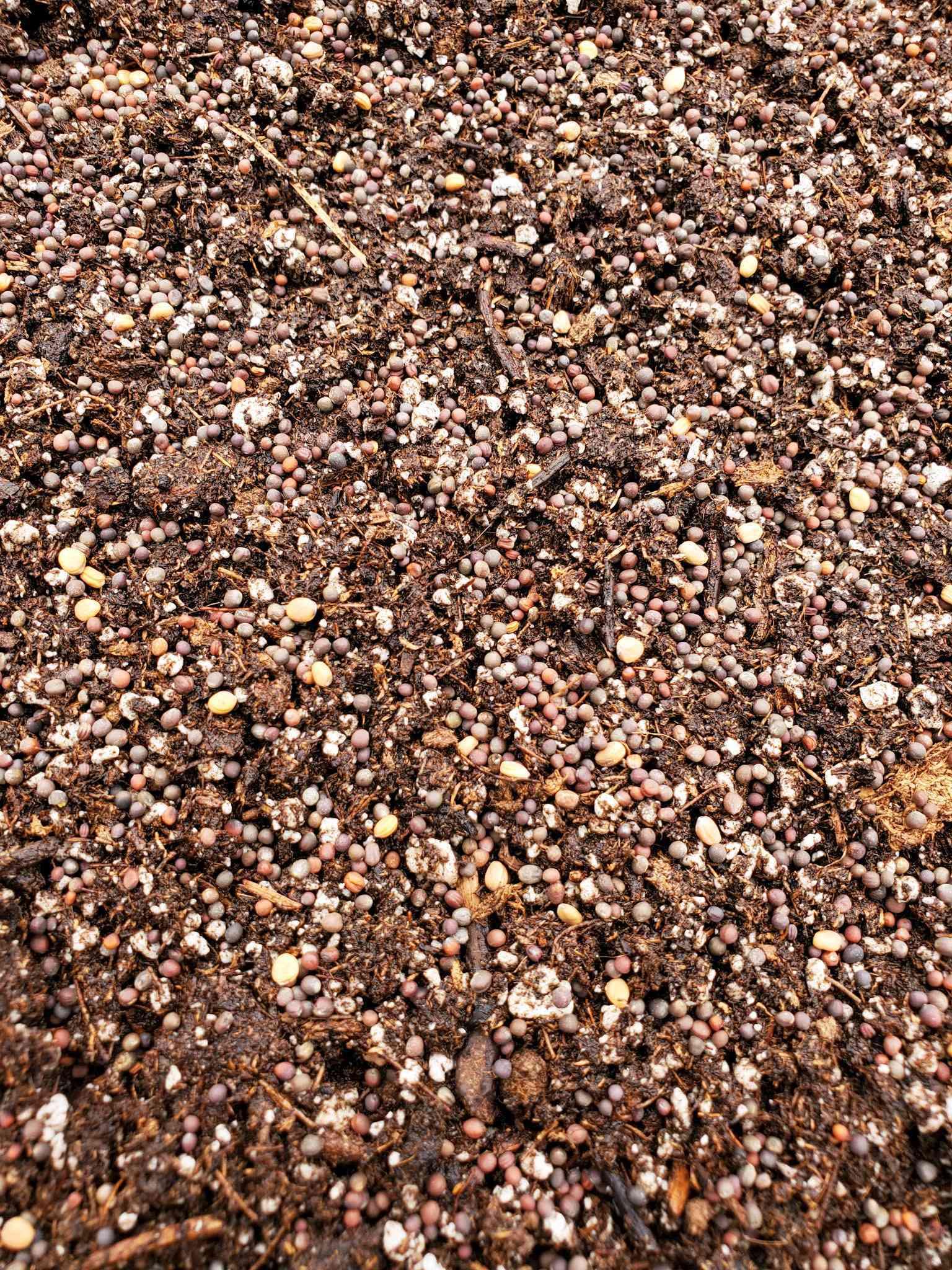 Une image en gros plan d'un mélange de graines de brassica semées sur le dessus du mélange de sol de départ des graines. Les graines sont plus petites et peuvent être semées plus fortement.