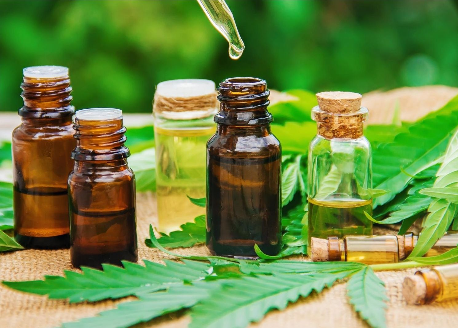 What is CBD 101: Uses, Health Benefits, & Precautions of Hemp ~ Homestead  and Chill